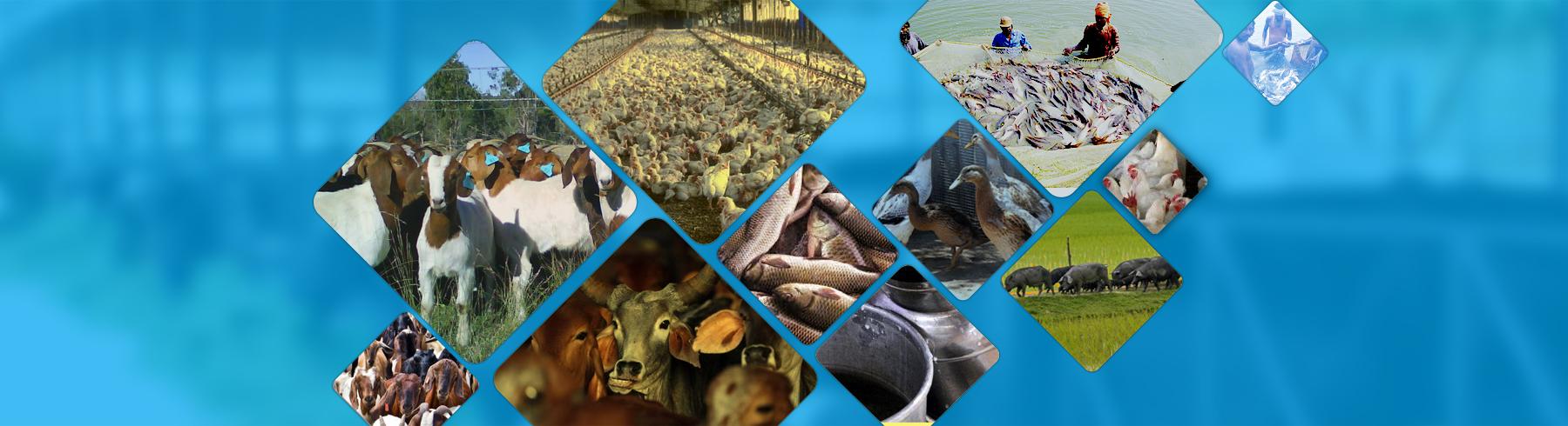 मुख्यमंत्री श्री अखिलेश यादव ने दुग्ध विकास विभाग तथा पशुधन विभाग के कार्यों की समीक्षा की