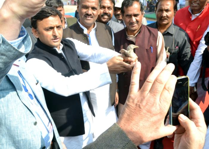 मुख्यमंत्री श्री अखिलेश यादव 5 दिसम्बर, 2015 को चम्बल सफारी, जरार बाह, आगरा में बर्ड फेस्टिवल कार्यक्रम के दौरान एक पक्षी के साथ।